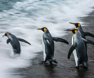 animals, penguins, and biology image