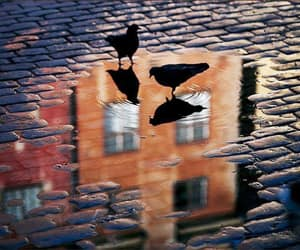 bird, photography, and puddle image