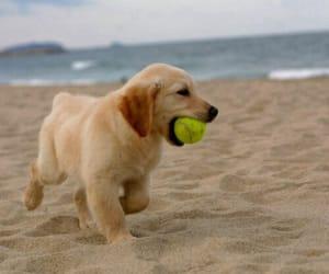 cute dog image