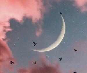 wallpaper, moon, and bird image