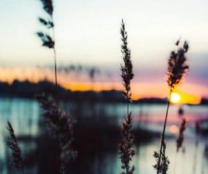 beautiful, sun, and water image