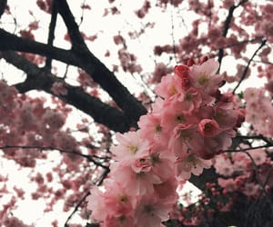 blossom, flowers, and outside image