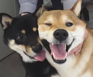 dog, animals, and happy image