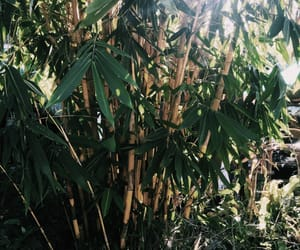 bamboo, summer, and tropical image