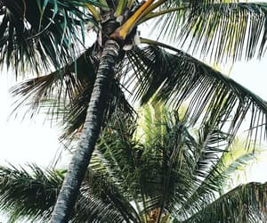 beach, green, and palms image