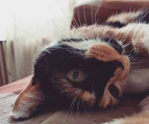 animals, cute, and cat image