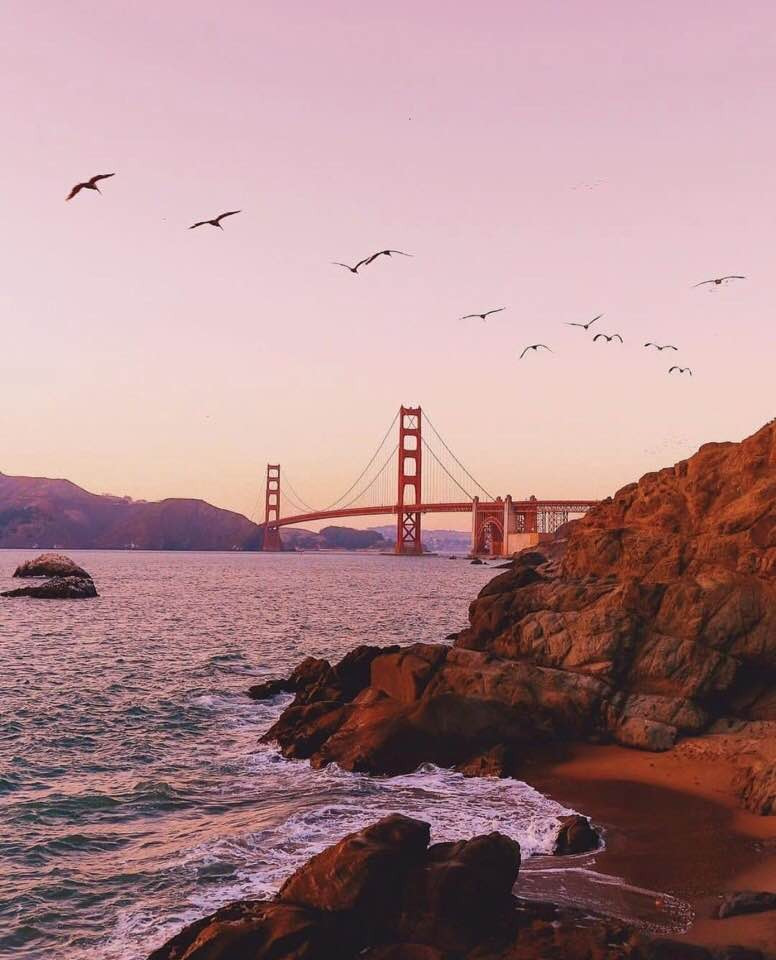 birds, sea, and bridge image