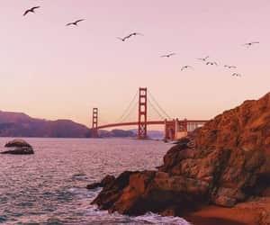 birds, bridge, and pink image