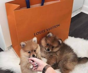 baby, dog, and luxury image