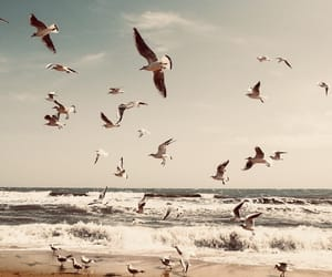 bird, beach, and ocean image