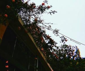 flowers, orange, and photography image