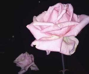 aesthetic, baby pink, and flower image