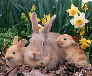 daffodils, easter, and bunny family image