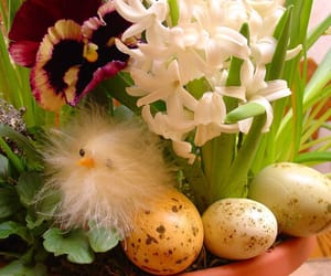 animal, Chick, and easter image