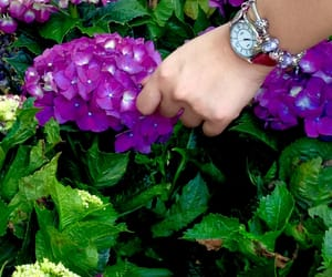 environment, fashion, and flowers image