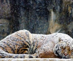 animals, snow, and nature image