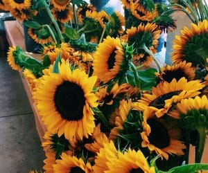 beautiful, fashion, and sunflowers image