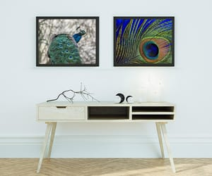 etsy, peacock feather, and peacock print image