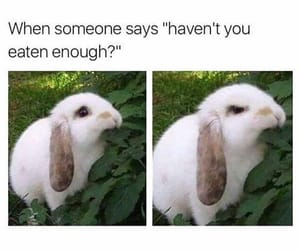 bunny, memes, and food image
