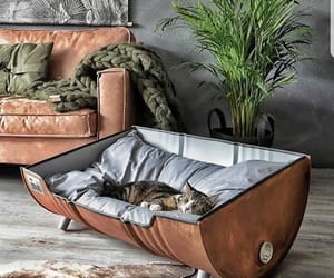 cat, living room, and design image