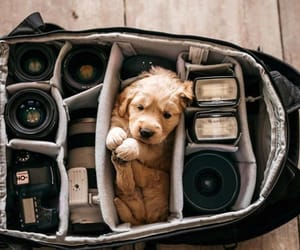 animals, doggie, and puppy image