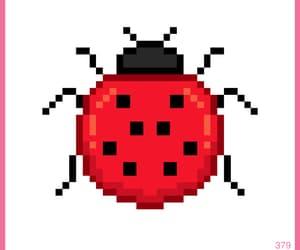 animal, colors, and ladybug image