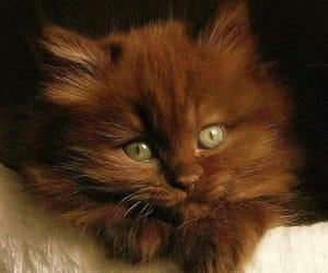 ladysuzanne and brown kitten image