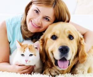 cbd oil for pain and induce vomiting in dogs image