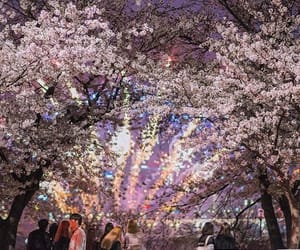 blossom, blossoms, and cherry image