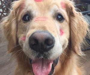 dog, kiss, and cute image