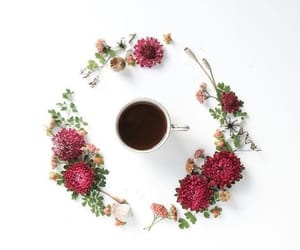 coffee, spring, and flower image