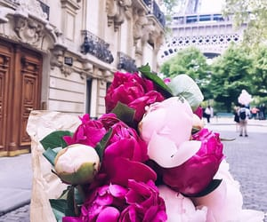 flowers, paris, and peonies image