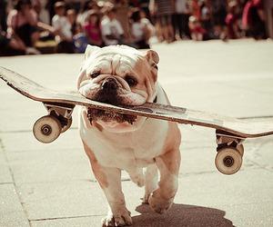 dog, skate, and skateboard image