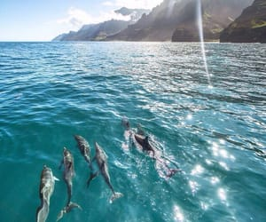 dolphins, Island, and ocean image