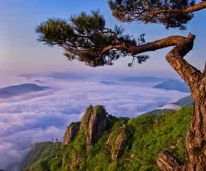 pine tree, landscape, and nature image