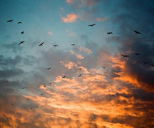 bird, sky, and photography image
