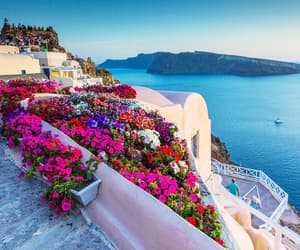 flowers, summer, and Greece image
