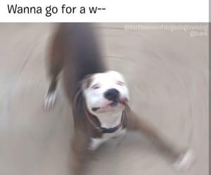 dog, funny, and meme image