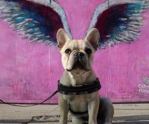 angel, animals, and california image