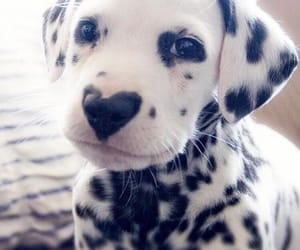 adorable, animals, and puppies image