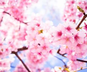 cherry blossom, sky, and flowers image