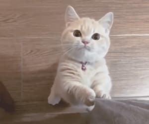 adorable, gif, and cat image