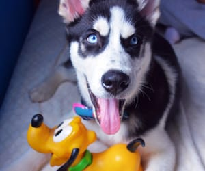 cute dogs, disney, and happy image