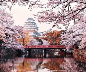 japan, aesthetic, and blossoms image