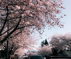 cherry blossom, city, and spring image
