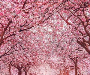 pink, spring, and cherry flowers image