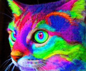 cat, colors, and animal image
