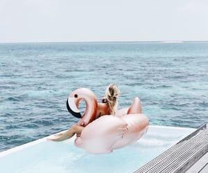 beach, flamingo, and holiday image