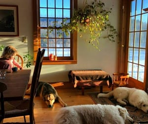 dogs, home, and house image