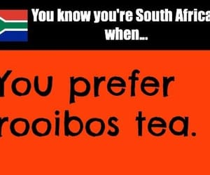tea, rooibos tea, and south african image